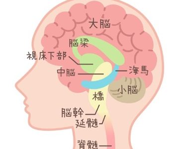 自律神経と脳幹