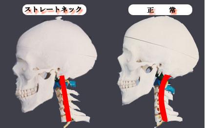 首(頚椎)について
